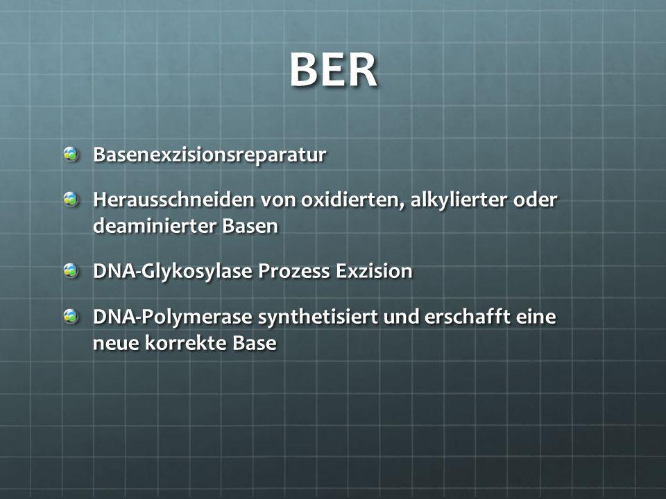 BER Basenexzisionsreparatur Herausschneiden von oxidierten, alkylierter oder deaminierter Basen DNA-Glykosylase Prozess Exzision DNA-Polymerase synthe