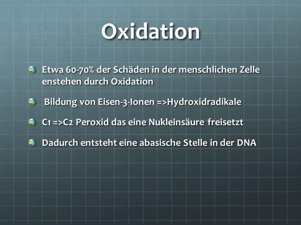 Oxidation Etwa 60-70% der Schäden in der menschlichen Zelle enstehen durch Oxidation Bildung von Eisen-3-Ionen =>Hydroxidradikale Bildung von Eisen-3-