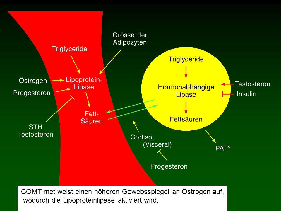 COMT met weist einen höheren Gewebsspiegel an Östrogen auf, wodurch die Lipoproteinlipase aktiviert wird.