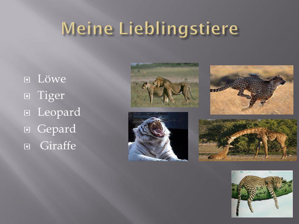  Löwe  Tiger  Leopard  Gepard  Giraffe