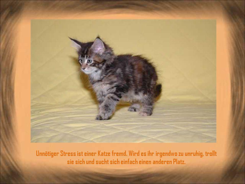 Unnötiger Stress ist einer Katze fremd.