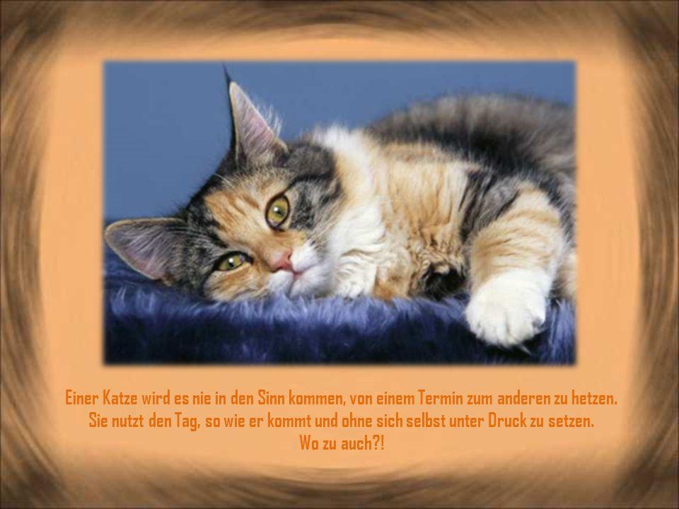 Einer Katze wird es nie in den Sinn kommen, von einem Termin zum anderen zu hetzen.