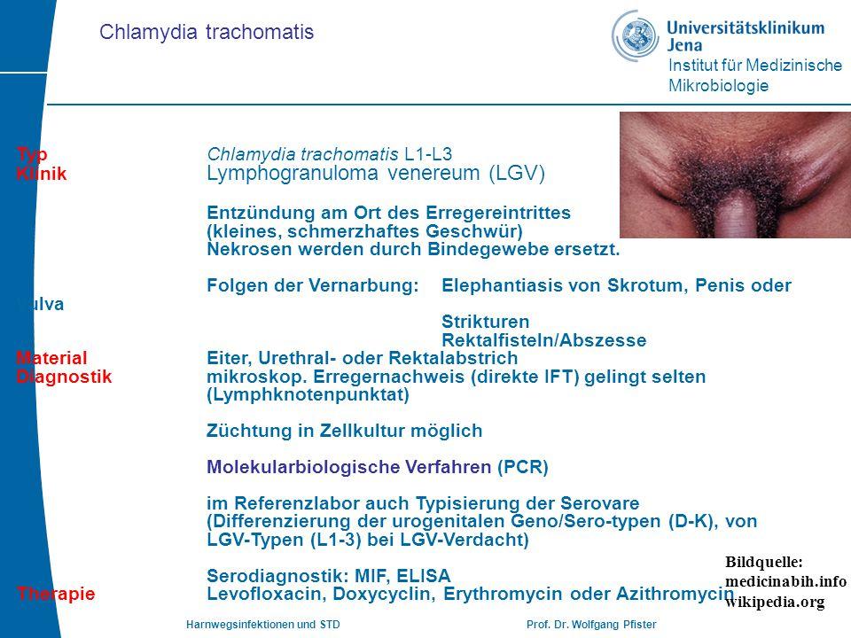 Institut für Medizinische Mikrobiologie Harnwegsinfektionen und STD Prof. Dr. Wolfgang Pfister TypChlamydia trachomatis L1-L3 Klinik Lymphogranuloma v