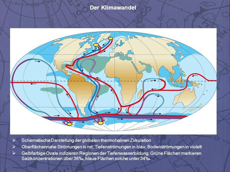 Der Klimawandel  Schematische Darstellung der globalen thermohalinen Zirkulation  Oberflächennahe Strömungen in rot, Tiefenströmungen in blau, Boden