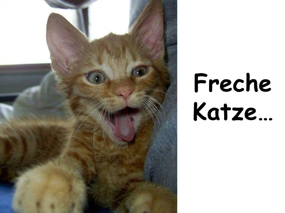 Freche Katze…