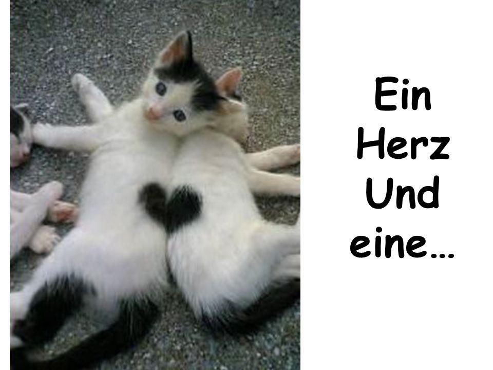 Ein Herz Und eine…