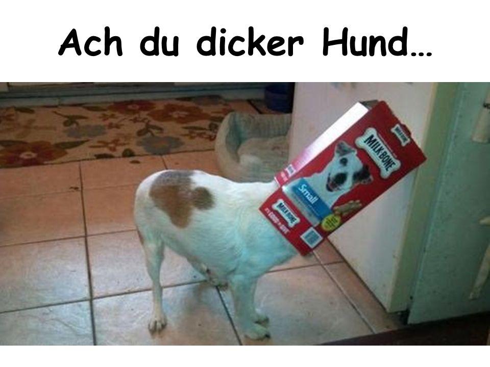 Ach du dicker Hund…