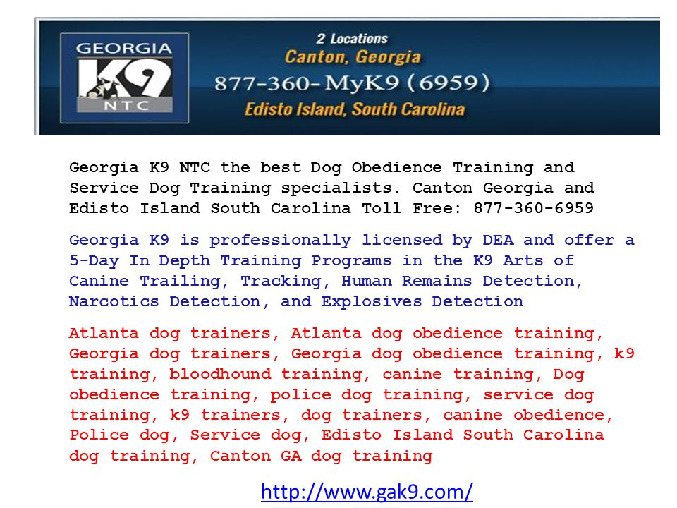 http://www.gak9.com/ Georgia K9 NTC the best Dog Obedience Training and Service Dog Training specialists. Canton Georgia and Edisto Island South Carol