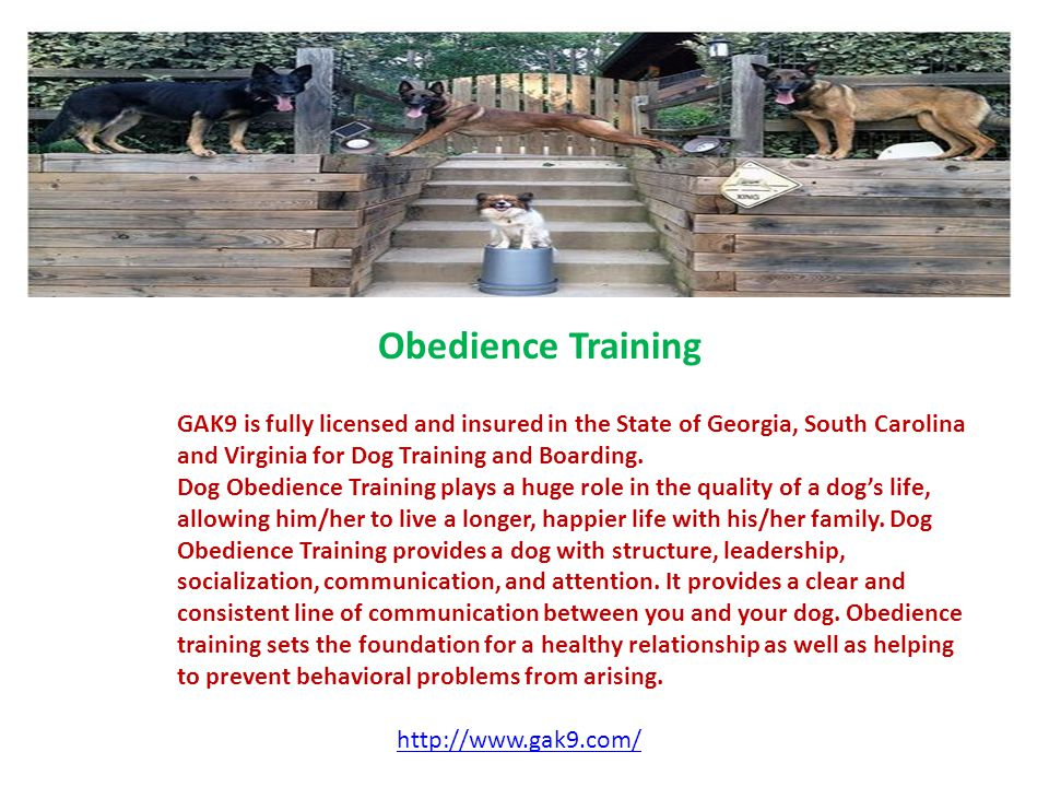 Obedience Training GAK9 is fully licensed and insured in the State of Georgia, South Carolina and Virginia for Dog Training and Boarding.