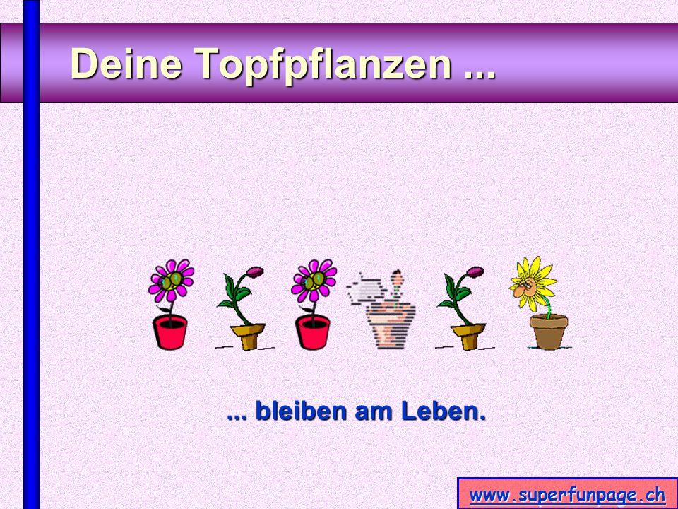 www.superfunpage.ch Deine Topfpflanzen...... bleiben am Leben.