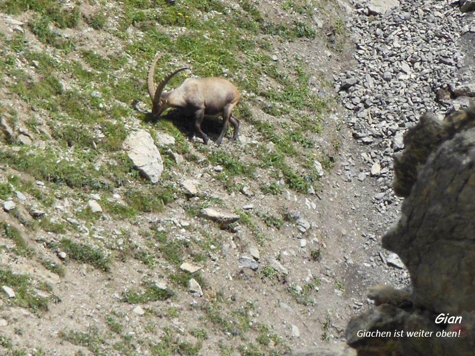 Im steilen Geröll Toni ist erstmals auf Bergtour, und wundert sich wie gut er mit solchen Passagen zurecht kommt