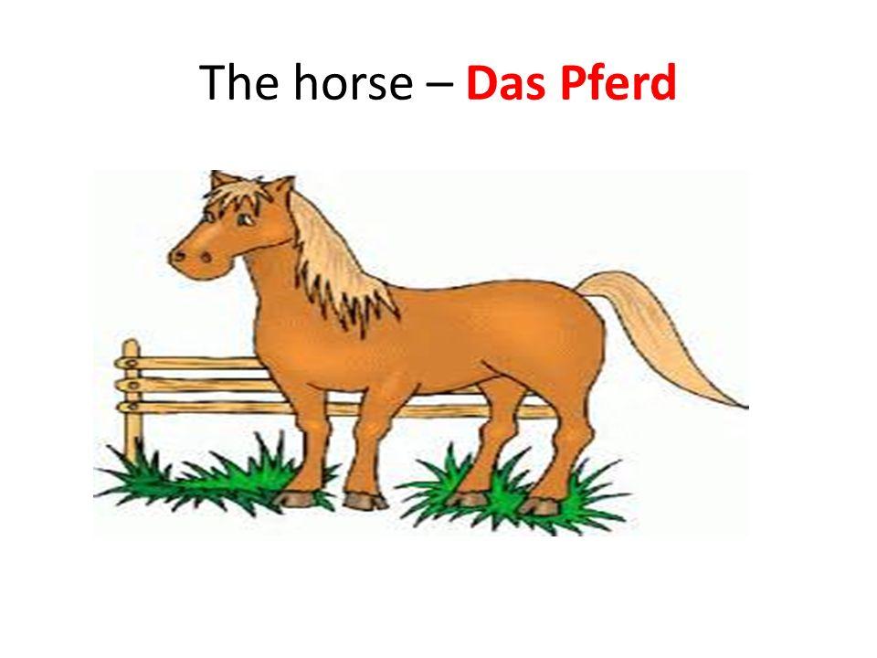 The horse – Das Pferd