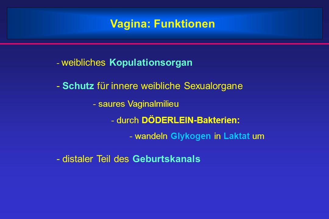 Vagina: Funktionen - weibliches Kopulationsorgan - Schutz für innere weibliche Sexualorgane - saures Vaginalmilieu - durch DÖDERLEIN-Bakterien: - wand