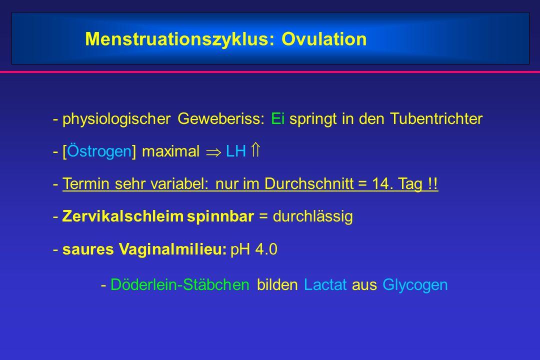 Menstruationszyklus: Ovulation - physiologischer Geweberiss: Ei springt in den Tubentrichter - [Östrogen] maximal  LH  - Termin sehr variabel: nur im Durchschnitt = 14.