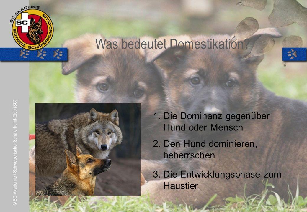 © Pia Koster Was bedeutet Domestikation. 2. Den Hund dominieren, beherrschen 3.