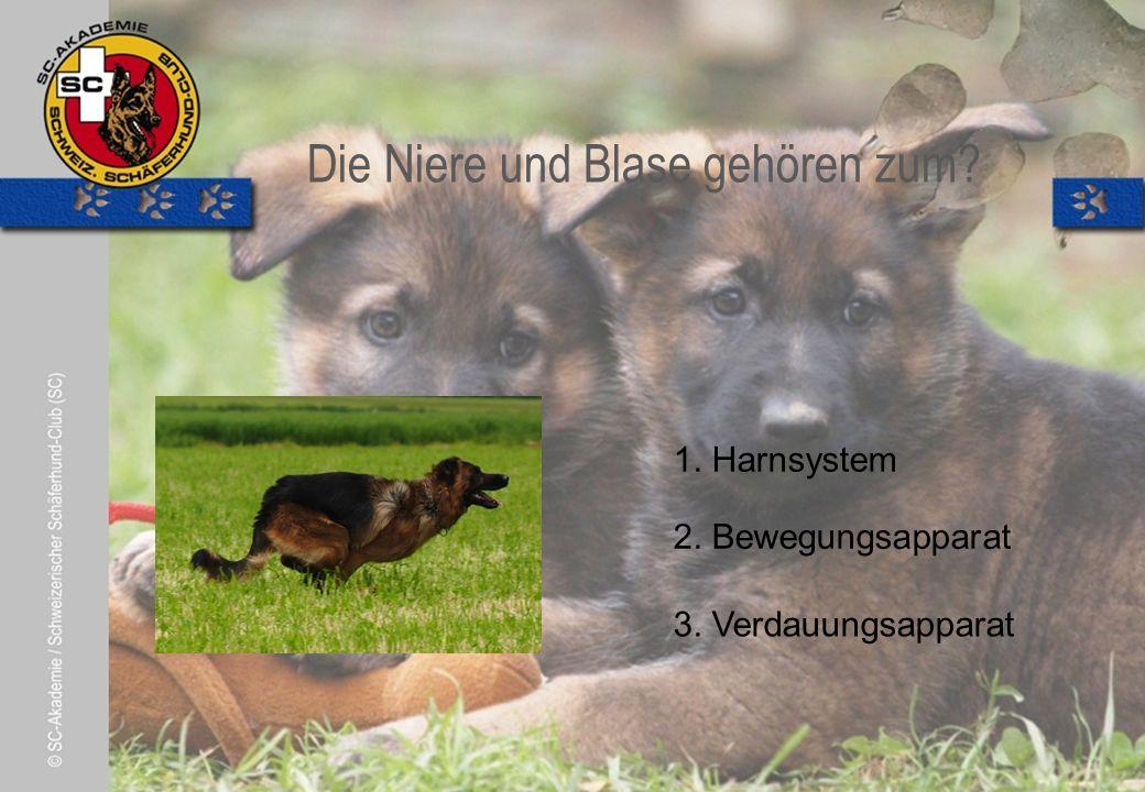 © Pia Koster Die Niere und Blase gehören zum. 2. Bewegungsapparat 3.