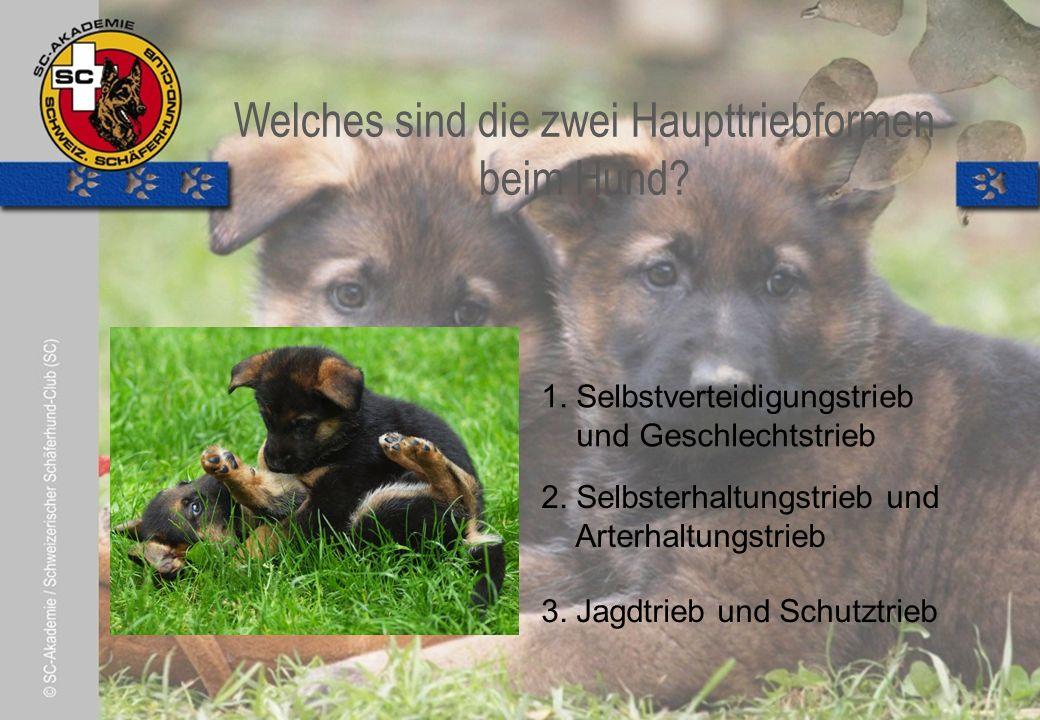 © Pia Koster Welches sind die zwei Haupttriebformen beim Hund.