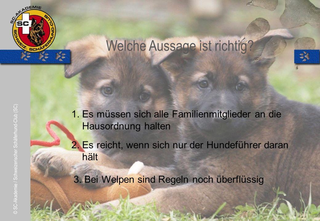 © Pia Koster Welche Aussage ist richtig. 2. Es reicht, wenn sich nur der Hundeführer daran hält 3.