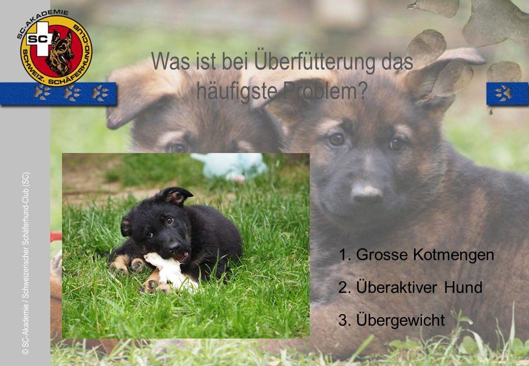 © Pia Koster Was bedeutet Domestikation.2. Den Hund dominieren, beherrschen 3.