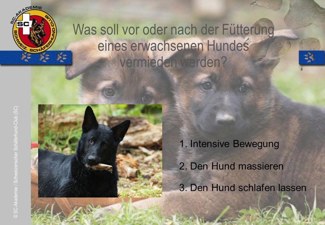 © Pia Koster Was soll vor oder nach der Fütterung eines erwachsenen Hundes vermieden werden.