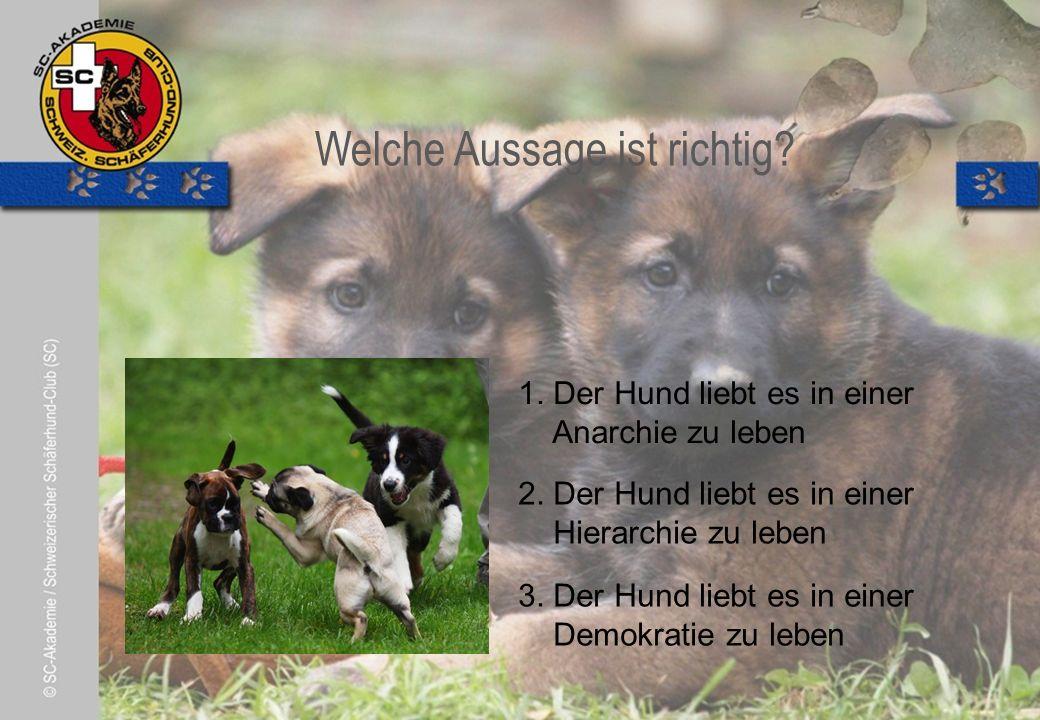© Pia Koster Welche Aussage ist richtig. 1. Der Hund liebt es in einer Anarchie zu leben 2.