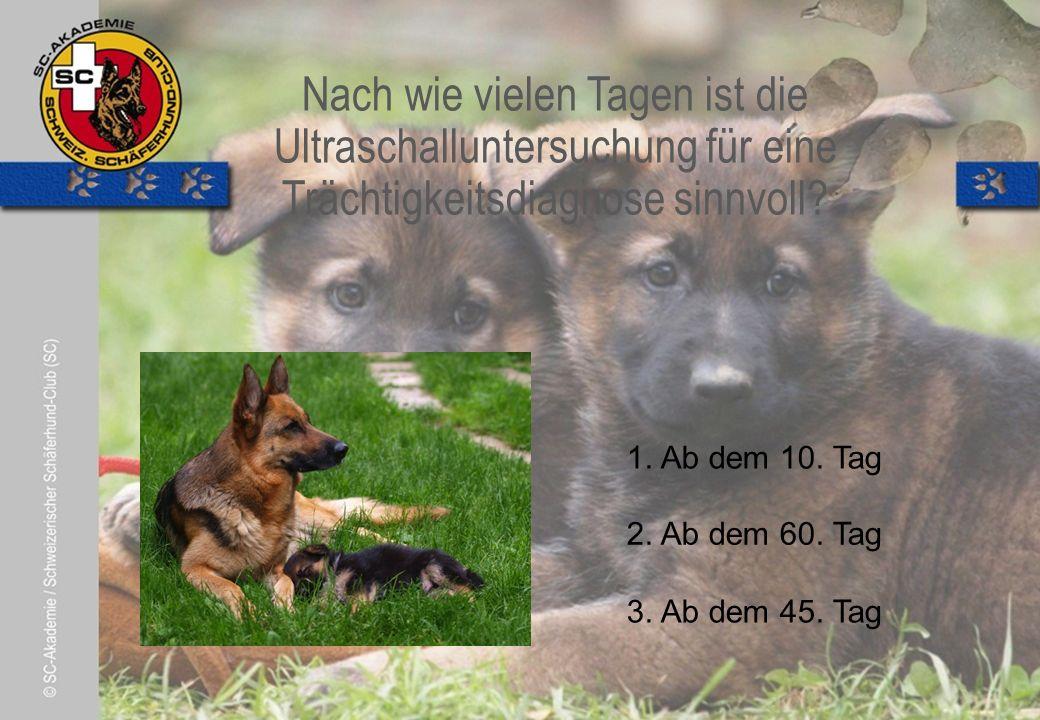© Pia Koster Welche Aussage ist richtig.2. Es reicht, wenn sich nur der Hundeführer daran hält 3.