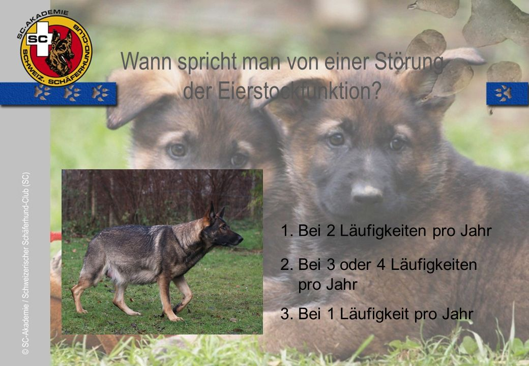 © Pia Koster Wie soll man seinen Hund als Welpen füttern.
