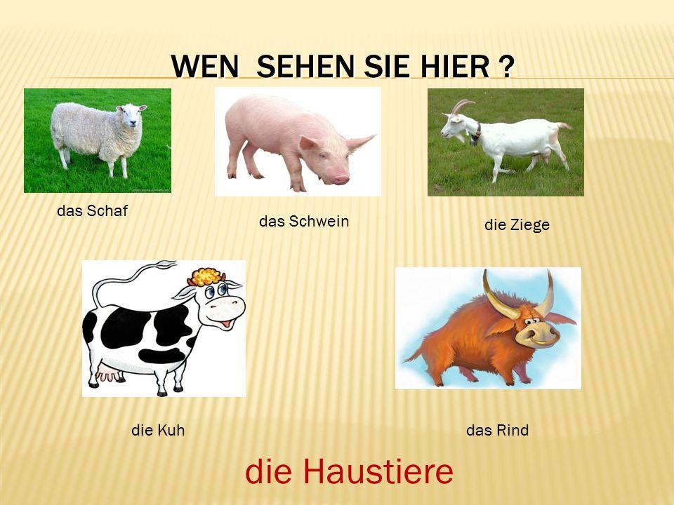 WEN SEHEN SIE HIER ? das Schaf das Schwein die Ziege die Kuhdas Rind die Haustiere