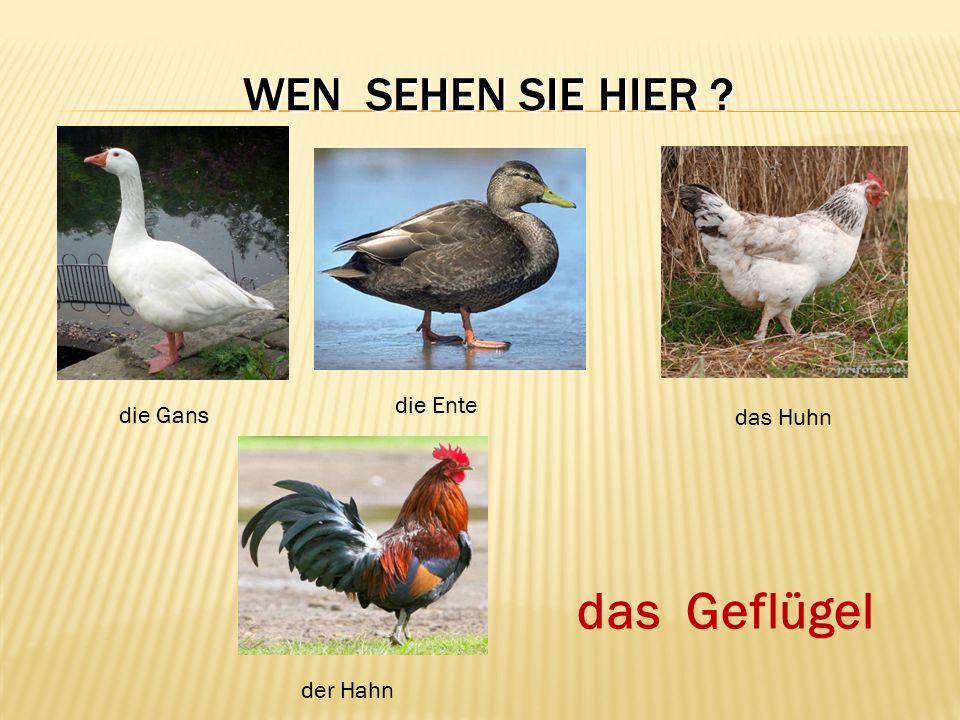 WEN SEHEN SIE HIER ? die Gans die Ente das Huhn der Hahn das Geflügel