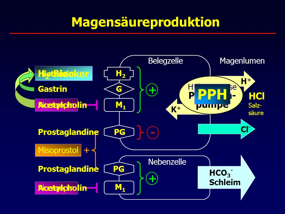 Magensäureproduktion Belegzelle H + /K + -ATPase Protonen- pumpe K+K+ H2H2 PG G M1M1 H+H+ HCl Salz- säure PPH Cl - Nebenzelle M1M1 PG H 2 -Blocker HCO 3 - Schleim Pirenzepin Misoprostol + + - + Gastrin Prostaglandine Histamin Acetylcholin Magenlumen