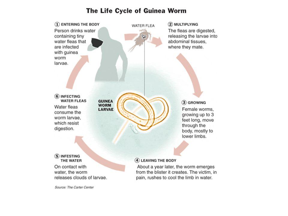 Die Zusammenhänge sind sehr simpel …. z.B. Guineawurm und Bill Gates!
