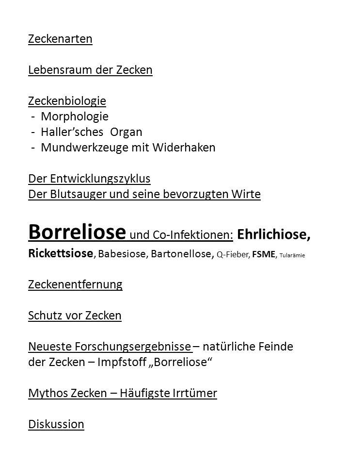 Stadium 2 Gelenkschwellung Stadium 3: Der Erreger setzt sich fest (chronisches Stadium) Bevorzugter Aufenthalt der Borrelien: Bindegewebe Lyme-Arthritis (Gelenkentzündungen, Muskel-/ Knochenschmerzen) Chronische Encephalitiden (Wesensveränderung) Haut: Acrodermatitis chronica atrophicans ödematöse, blaurot verfärbter Haut atrophische, dünne Haut Neuroborreliose mit Polyneuropathie Chronische Herzmuskelentzündung Augenbeteiligungen: Iritis, Konjunktivitis, Sehnerventzündung (Papillitis) Lange Latenzzeit: im Stadium 3 kann ein Ausbruch der Krankheit Monate bis Jahre nach der Infektion erfolgen.
