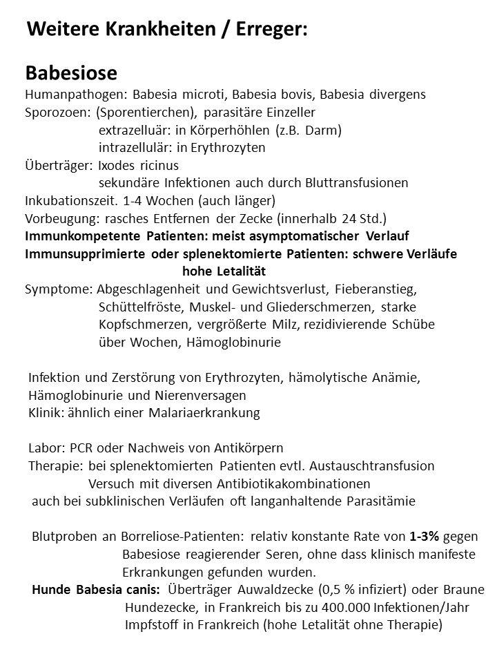 Weitere Krankheiten / Erreger: Babesiose Humanpathogen: Babesia microti, Babesia bovis, Babesia divergens Sporozoen: (Sporentierchen), parasitäre Einz