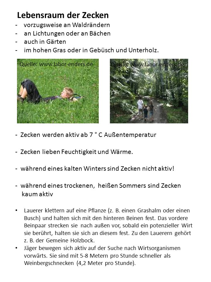 Lebensraum der Zecken - vorzugsweise an Waldrändern -an Lichtungen oder an Bächen -auch in Gärten -im hohen Gras oder in Gebüsch und Unterholz. - Zeck