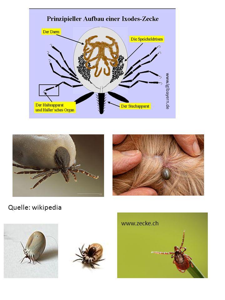 www.zecke.ch www.lglbayern.de Quelle: wikipedia