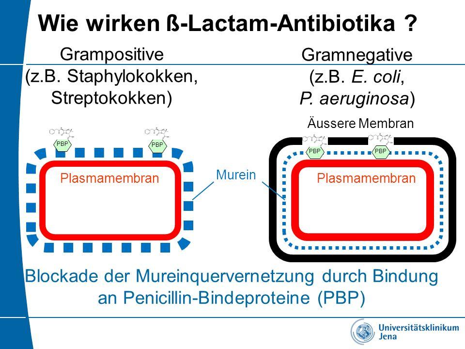Wie wirken ß-Lactam-Antibiotika ? Gramnegative (z.B. E. coli, P. aeruginosa) Grampositive (z.B. Staphylokokken, Streptokokken) Plasmamembran Äussere M