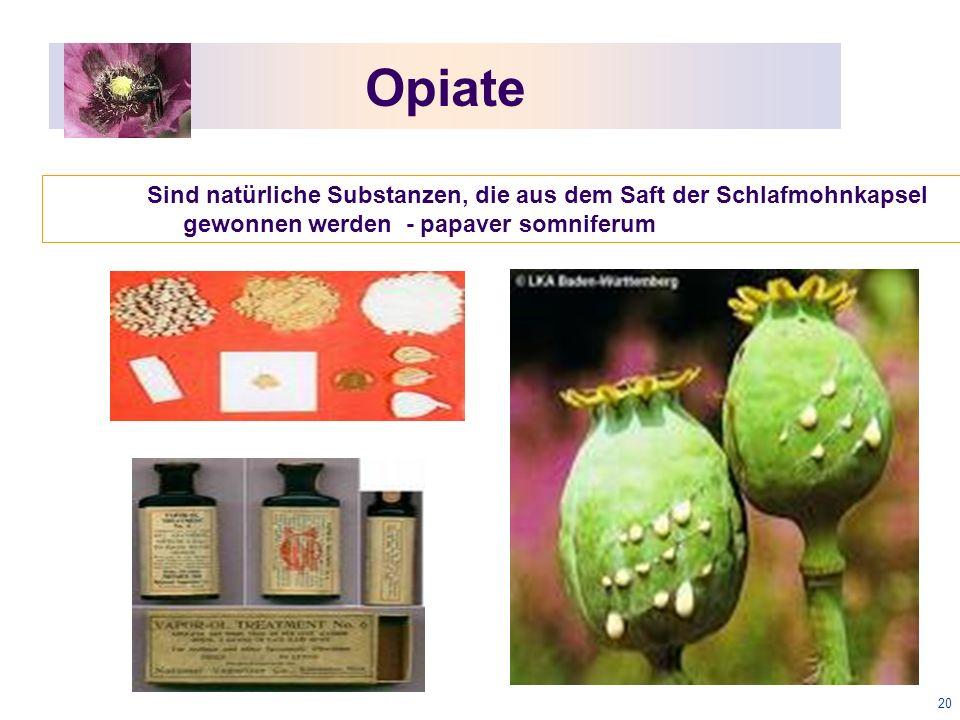 20 Opiate Sind natürliche Substanzen, die aus dem Saft der Schlafmohnkapsel gewonnen werden - papaver somniferum