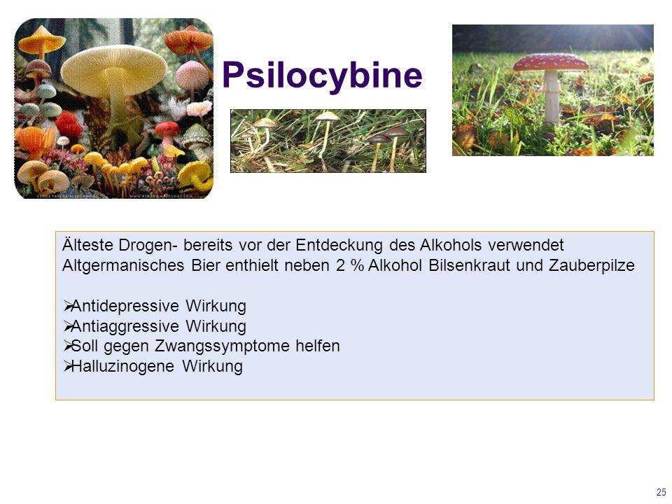 25 Psilocybine Älteste Drogen- bereits vor der Entdeckung des Alkohols verwendet Altgermanisches Bier enthielt neben 2 % Alkohol Bilsenkraut und Zauberpilze  Antidepressive Wirkung  Antiaggressive Wirkung  Soll gegen Zwangssymptome helfen  Halluzinogene Wirkung