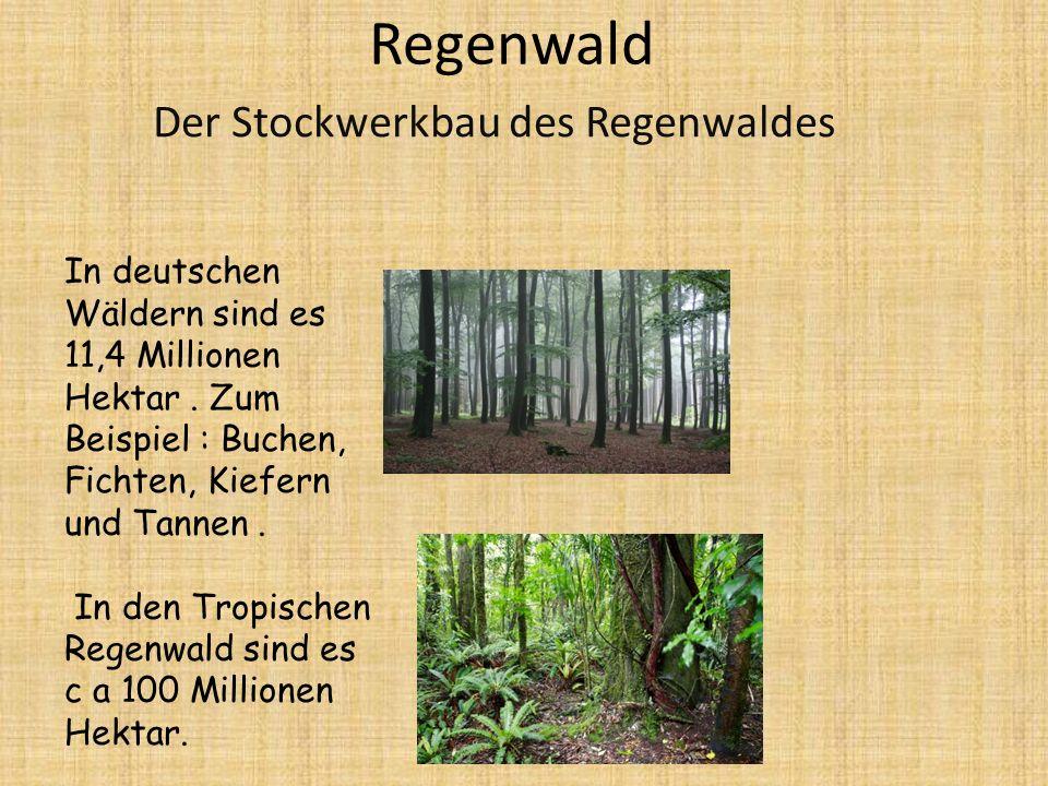 Regenwald Der Stockwerkbau des Regenwaldes In deutschen Wäldern sind es 11,4 Millionen Hektar.