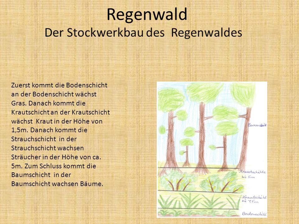 Bodenschicht: besteht aus Wurzelwerk der Pflanzen sowie aus einer meist sehr dünnen Humusdecke sowie den darin siedelnden Kleinlebewesen, Bakterien, Algen und Pilzen.