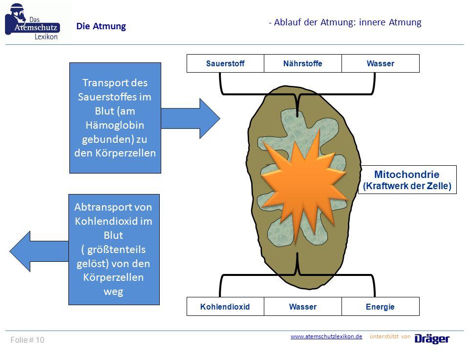www.atemschutzlexikon.dewww.atemschutzlexikon.de ünterstützt von Folie # 10 Die Atmung - Ablauf der Atmung: innere Atmung Mitochondrie (Kraftwerk der