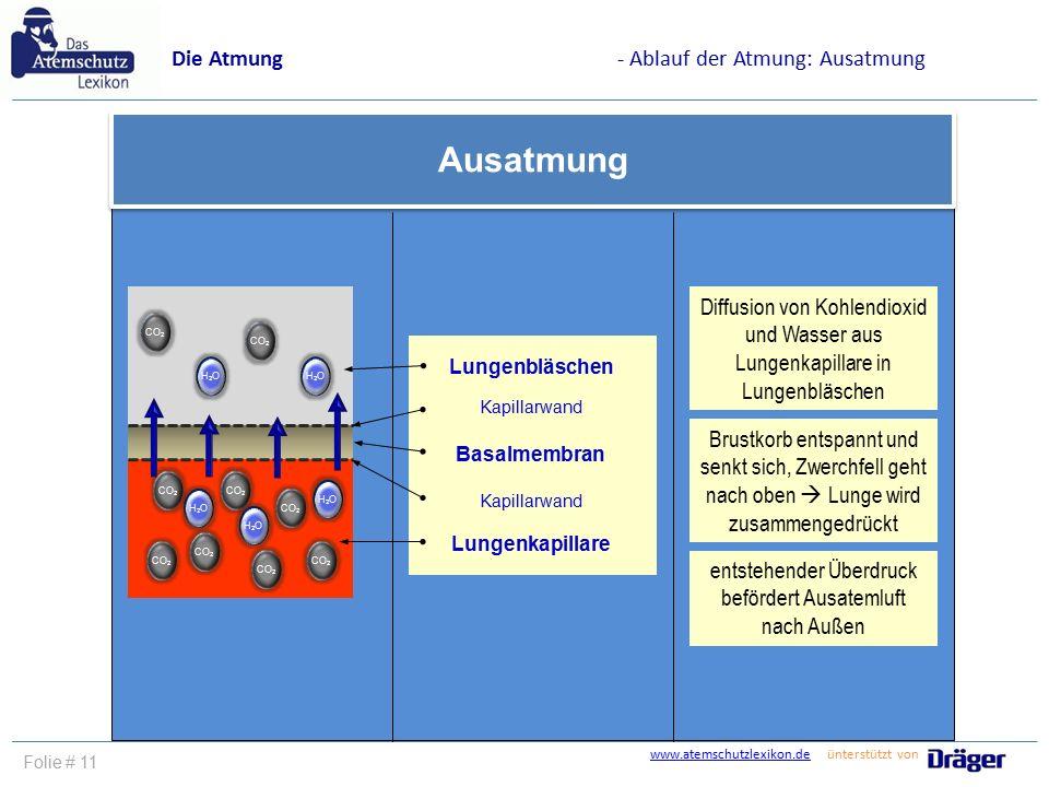 www.atemschutzlexikon.dewww.atemschutzlexikon.de ünterstützt von Folie # 11 Die Atmung- Ablauf der Atmung: Ausatmung Ausatmung Lungenbläschen Kapillar