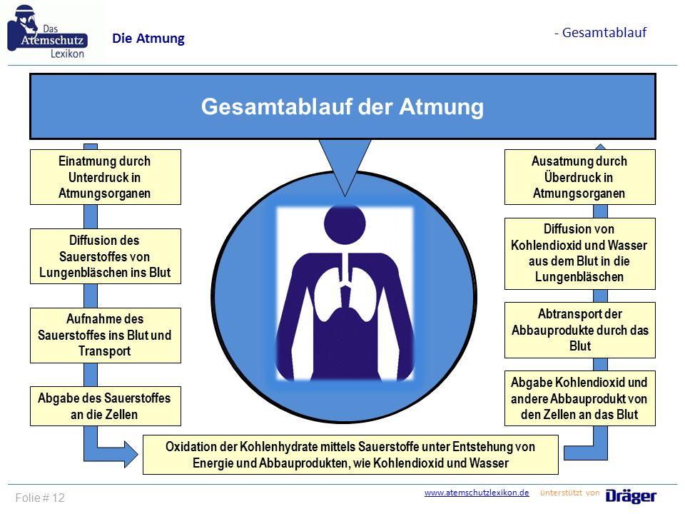 www.atemschutzlexikon.dewww.atemschutzlexikon.de ünterstützt von Folie # 12 Die Atmung - Gesamtablauf Einatmung durch Unterdruck in Atmungsorganen Dif