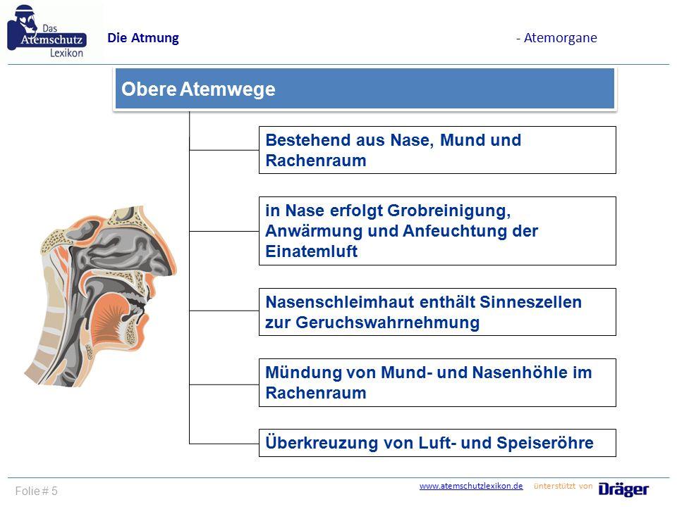 www.atemschutzlexikon.dewww.atemschutzlexikon.de ünterstützt von Folie # 5 Bestehend aus Nase, Mund und Rachenraum in Nase erfolgt Grobreinigung, Anwä