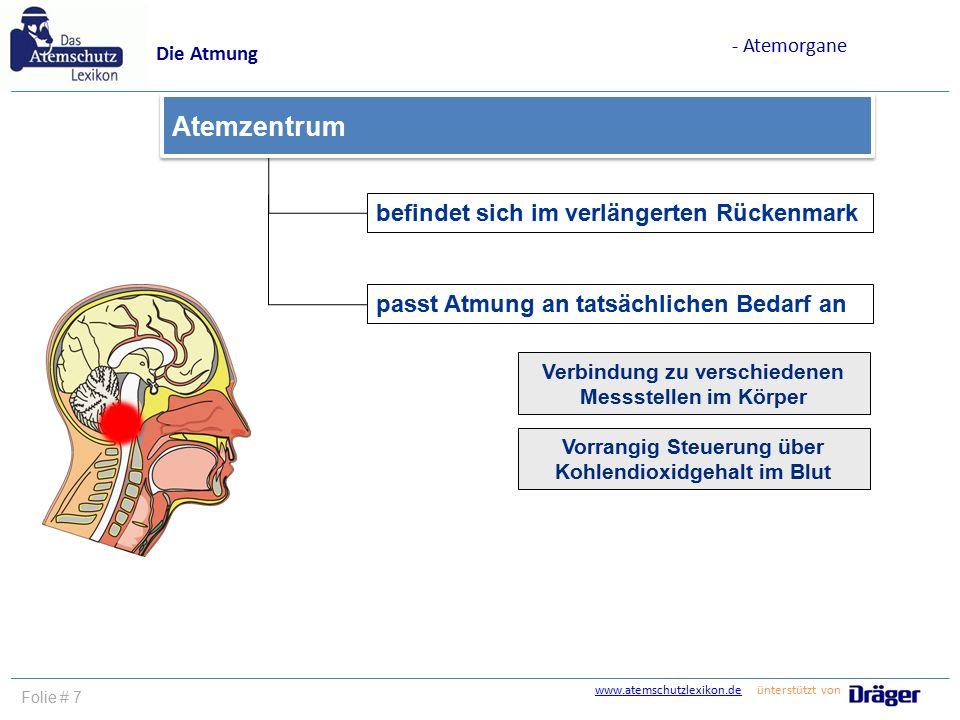 www.atemschutzlexikon.dewww.atemschutzlexikon.de ünterstützt von Folie # 7 befindet sich im verlängerten Rückenmark Atemzentrum Die Atmung - Atemorgan