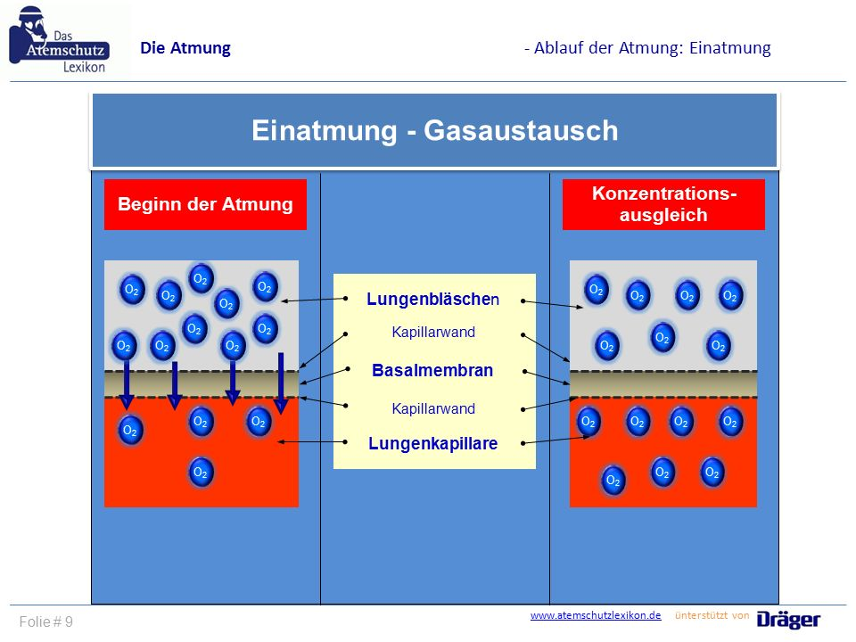 www.atemschutzlexikon.dewww.atemschutzlexikon.de ünterstützt von Folie # 9 Die Atmung- Ablauf der Atmung: Einatmung Einatmung - Gasaustausch Beginn de