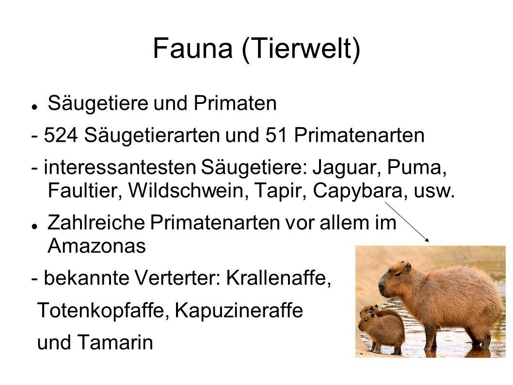 Fauna (Tierwelt) Säugetiere und Primaten - 524 Säugetierarten und 51 Primatenarten - interessantesten Säugetiere: Jaguar, Puma, Faultier, Wildschwein, Tapir, Capybara, usw.