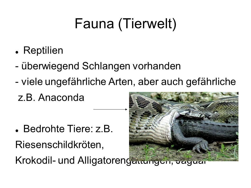 Fauna (Tierwelt) Reptilien - überwiegend Schlangen vorhanden - viele ungefährliche Arten, aber auch gefährliche z.B.