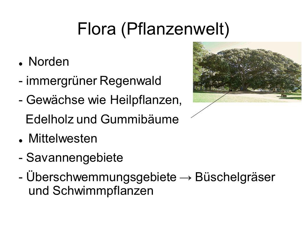 Flora (Pflanzenwelt) Norden - immergrüner Regenwald - Gewächse wie Heilpflanzen, Edelholz und Gummibäume Mittelwesten - Savannengebiete - Überschwemmungsgebiete → Büschelgräser und Schwimmpflanzen