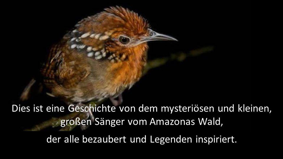 Dies ist eine Geschichte von dem mysteriösen und kleinen, großen Sänger vom Amazonas Wald, der alle bezaubert und Legenden inspiriert.